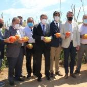 El MInistro Luis Planas con el Tomate Huevo de Toro