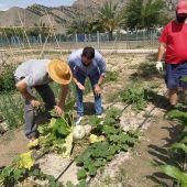Abierto el plazo para optar al uso de las parcelas urbanas ecológicas en Orihuela