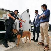 Presentados cuatro nuevos furgones de la policia local destinados a varias unidades de servicio