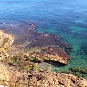 El Instituto de Ecología Litoral destaca la calidad ambiental de las aguas del litoral de Orihuela