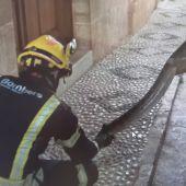Serpiente rescatada en Benissa por los bomberos