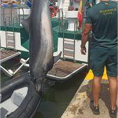 El delfín muerto encontrado en la playa de La Marina de Elche.