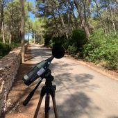 El Consell de Formentera elabora el Plan Acústico y Mapa de Ruidos de la isla