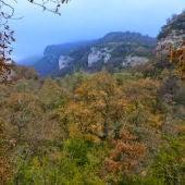 Bosque de Álava