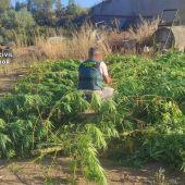 Plantación intervenida