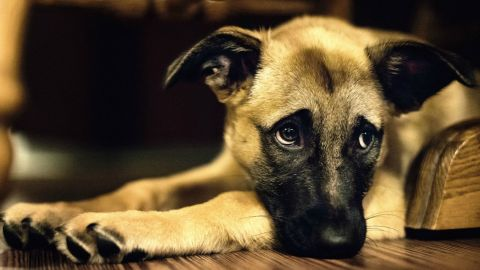 El adiestramiento mejora la comunicación y la convivencia entre perros y humanos