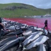 Matanza de 1.400 delfines en una cacería en Islas Feroe