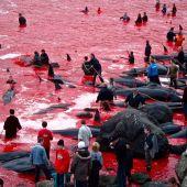 Matanza de delfines en las Islas Fereo