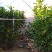 La Guardia Civil investiga a una persona por supuesto delito contra la salud pública por cultivo de marihuana