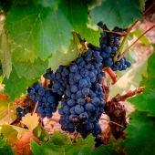 Ciencia en la Brújula: ¿Qué son los taninos del vino?
