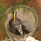El elefante caído en un pozo en la India